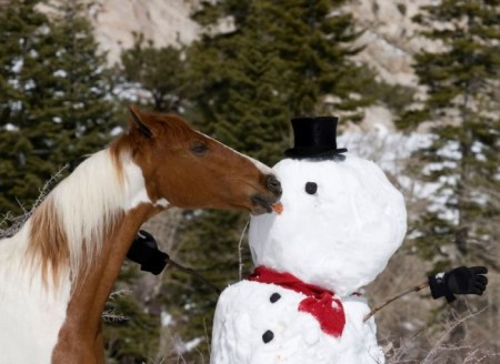horse with snowman