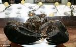 George the oldest living lobster