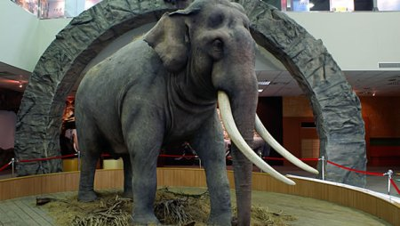 The taxidermic specimen of the oldest elephant on record, 86 year-old Lin Wang, at the Taipei City Zoo, Taiwan. Photo Credit: History.com