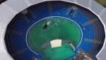 Captive animals, orcas, killer whales, lolita, animal rights