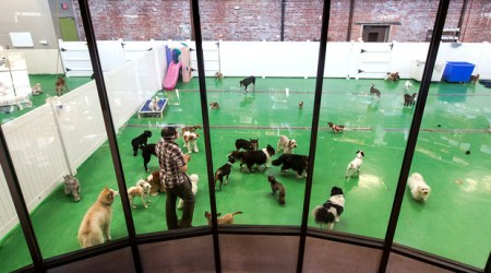 These dogs are enjoying playtime at one of San Francisco's Wag Hotels. Photo credit: Gilt City