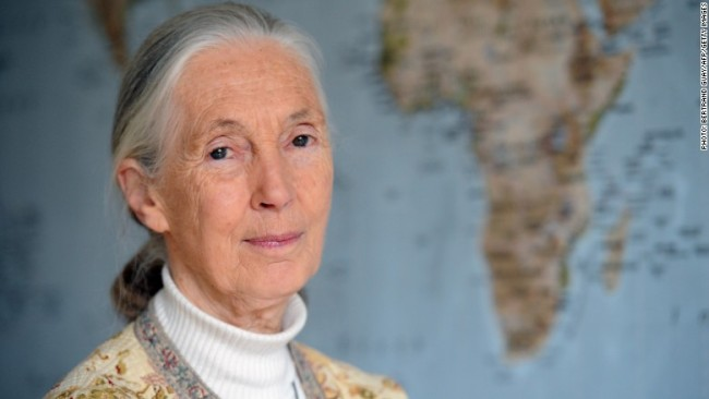 Jane Goodall advocates that animals at SeaWorld have emotions just like ours. Photo credit: Getty Images