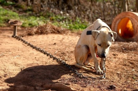 In this cruel blood sport, dogs are forced to fight and left to die. Photo Credit: TheDoDo