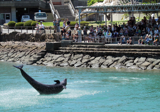 Visitors watch a dolphin perform at the Taiji Whale Museum. Photo credit: Yuzuru Yoshikawa/Bloomberg