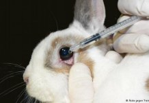 Millions of animals are used for animal testing each year. Photo credit: DW.com
