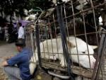 caged dog china dog meat festival
