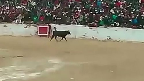 Video footage documents an enraged bull charging into the crowd during a bullfighting event in Peru. Photo Credit: YouTube