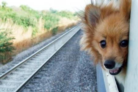 A surcharge of $25 will be assessed for pet travel. Photo credit: Animal Fair