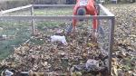 bun bun destroyer of leaves bunny rabbit jumps in leaves