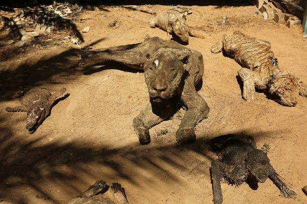 Bodies of mummified animals at Khan Younis zoo. Photo Credit: Rex via Mirror