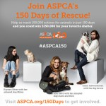 Join the ASPCA in their fight against animal cruelty! Photo credit: ASPCA