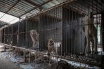 dogs at south korean dog meat farms