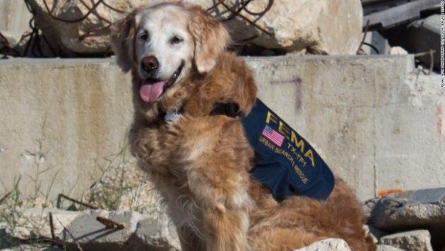 Bretagne last 9-11 dog euthanized