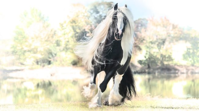 Meet Pearlie King The Orca Horse