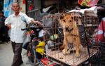 caged dog for sale at market in Yulin for dog meat festival