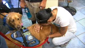 Dogs Comfort Victims After Tragedy In Orlando