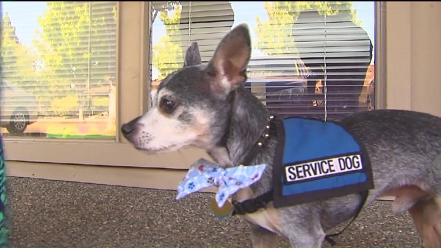 Hook The Hero Dog Saves Woman From Approaching Train