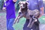 humane society of louisiana rescues a dog after Louisiana flooding