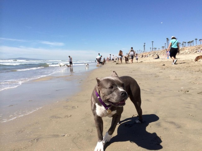 And now her Life in Southern California is a Beach!
