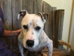 stark-dog-rescued-from-louisiana-flood-brought-to-animal-hospital