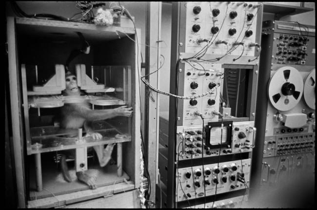 A research primate at University of California, Berkeley, 1967. Photo Credit Henri Cartier-Bresson/Magnum Photos