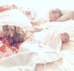artie-paralyzed-dachshund-dog-with-baby-and-dad-in-bed