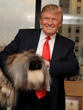 Donald Trump poses with Malachy, a Pekingese and top contender at the Westminster Kennel Club's Best in Show in 2012. Photo Credit: buzzsharer.com