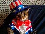 uncle-sam-cat-in-american-flag-outfit