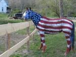 patriotic-horse-painted-like-american-flag