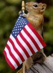 patriotic-squirrel-holding-american-flag
