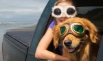 Paws Like Me woman with golden retriever wearing goggles