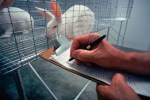 animal testing research rabbit in cage