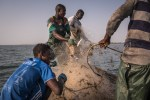 Senegalese, African fishermen with their meager catch