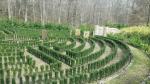 well kept maze on Woodstock property
