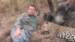 Big game hunter Theunis Botha lying with a slain leopard after a hunt