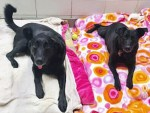 Senior Dog Siblings Zule and Jolie are up for Adoption at Bideawee animal rescue in NYC