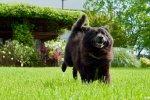 Senior dog, Edith was rescued by PETA