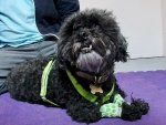 Stanley, senior dog adopted by Global Animal founders