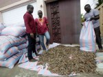 Ivorian wildlife agents with bags of pangolin scales confiscated from traffickers in Abidjan, Ivory Coast