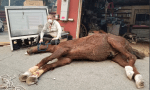 Kenny the horse rescued during California wildfires after falling trying to escape