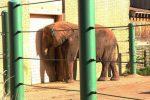 lonely depressed elephant at Louisville Zoo in Louisville, Kentucky