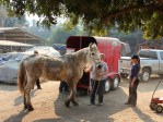 lost horse rescued during Thomas fire in ventura county