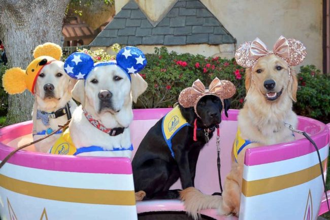 Service Dogs' Magical Day At Disneyland