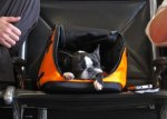 boston terrier in pet carrier at airport