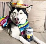 Dogs Coping with Coronavirus Quarantine photos