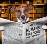 Humans Stay Home, Dogs overjoyed during coronavirus pandemic
