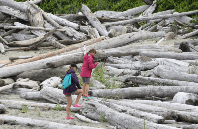 Exploring the driftwood