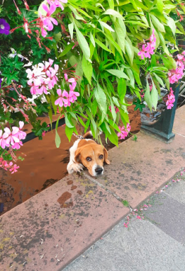 A puppy in the canal