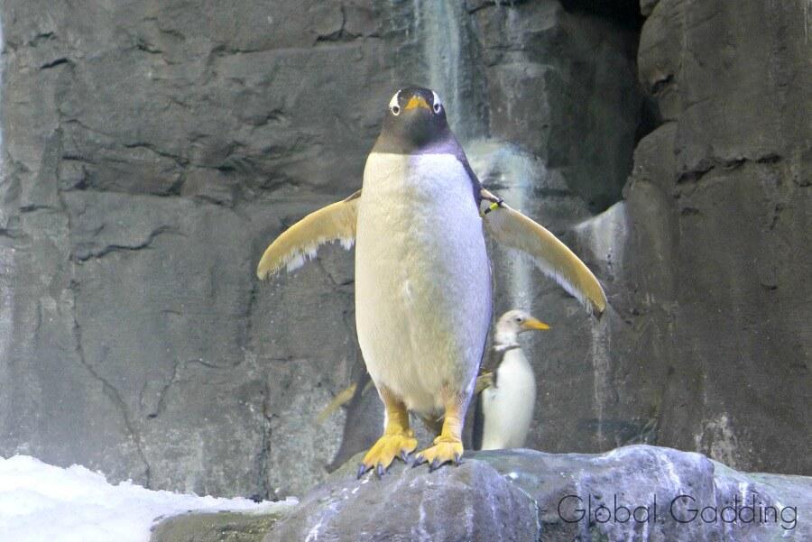 dubai aquarium penguin