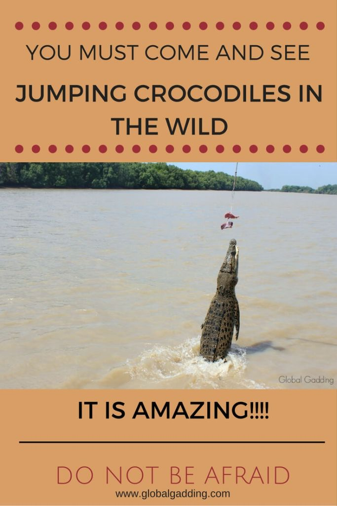jumping crocodile cruise adelaide river
